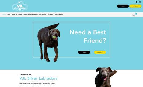 VJL Silver Labradors